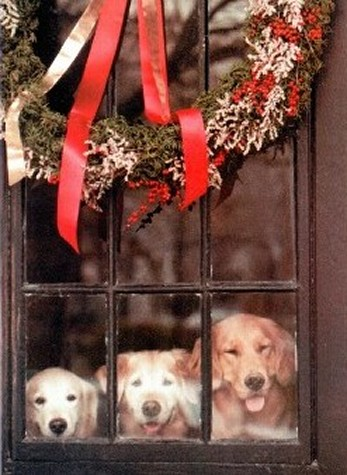 Dogs in Window at Christmas